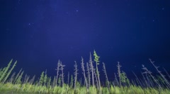 Night timelapse, sky, clouds, stars, trees Stock Footage