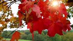 Autumn leaves in the sun Stock Footage