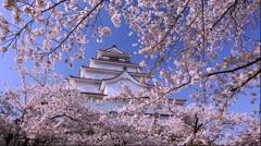 Cherry blossoms at Tsuruga Castle, Fukushima Prefecture, Japan - stock footage