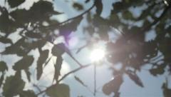 Green leaves trembling on the sunshine Stock Footage