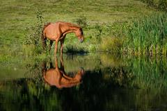 Horse At The Watering Place - stock photo