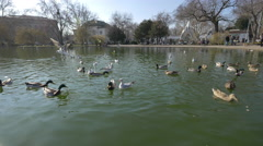 Ducks and seagulls on the lake in Budapest Stock Footage