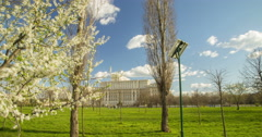 Spring time lapse with Parliament House and blossom tree in Bucharest 4K Stock Footage