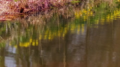 Pond Ripples Reflection Flowers Stock Footage