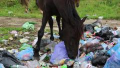 Black horse on the dump waste Stock Footage