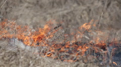 Wind strengthens fire on burning dry grass - stock footage