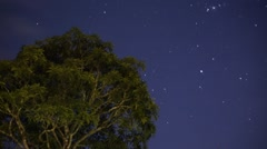 The starry sky time lapse above big tree Stock Footage