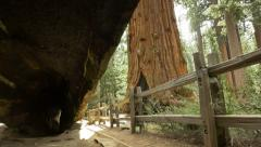 Stock Video Footage of 4K Sequoia Forest 07 Tilt Up Grant Grove Kings Canyon