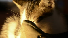 Kitten and a shoe close-up Stock Footage