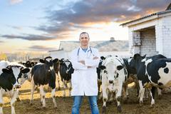 Veterinarian at  farm cattle Stock Photos