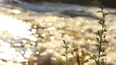 River flow sunset, light reflex in flowing water Stock Footage