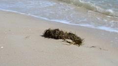 Sea and algae  Stock Footage