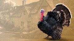 Domesticated turkey on the background of a rural village Stock Illustration