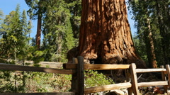 Stock Video Footage of 4K Sequoia Forest Dolly 01 Grant Grove Kings Canyon