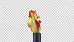 Growing, opening and rotating French tulip with ALPHA, UHD 4K Stock Footage