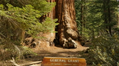 4K Sequoia Forest Dolly 06 General Grant Tree Kings Canyon Stock Footage