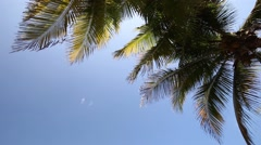 Silhouette of palm on sky background Stock Footage