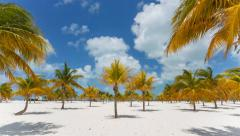 Palm trees at the beach Stock Footage