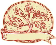 Olive Tree Ribbon Oval Etching - stock illustration