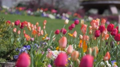 Pretty tulip gardens in the spring Stock Footage