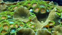 Cup likes green corals in the bed of the ocean - stock footage