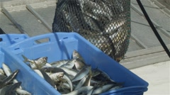 Commercial Fishing Industry fisherman fish catch on boat at fishing docks - stock footage