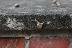 Slugs On Stone Stock Photos