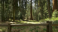Stock Video Footage of 4K Sequoia Forest Timelapse 08 Tilt Up Grant Grove Kings Canyon