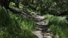 WALKING POV UP A TRAIL IN A HILLY FOREST. Stock Footage
