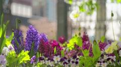 Springtime flowers Stock Footage