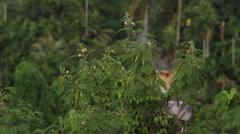 Jungle Foliage - PALAU Stock Footage