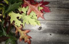 Fading autumn Leaves on Age Wood Stock Photos