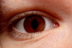 Predator Eye - stock photo