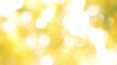 Yellow Bokeh background, yellow color affected from Golden shower through sunlig Stock Footage