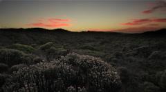 Cape Fynbos at Sunrise Stock Footage