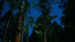 Sequoia Timelapse Stars 01 Dolly and Tilt Down Stock Footage