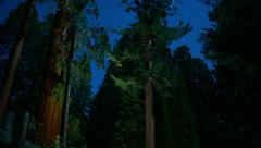 Sequoia Timelapse Stars 02 Dolly and Tilt Up Stock Footage