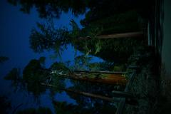 Sequoia Timelapse Stars Vertical 01 Dolly and Panning Stock Footage