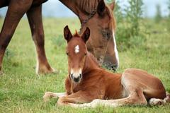 Foal and horse on pasture Stock Photos