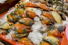 Stone crab claws on a ice in Thailand market Stock Photos