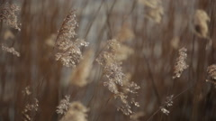 Reed_riverbank Stock Footage