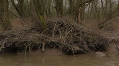 Beaver_nest - stock footage