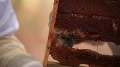 Honey, honeycomb, bee Stock Footage