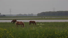 Horses_in_countryside Stock Footage