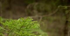 Small pine tree camera tracking Stock Footage