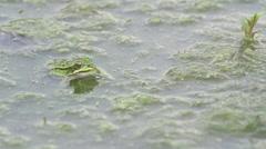 Frog_jumping_slomo Stock Footage