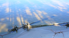 Submerged tree trunk in water near the coast. Stock Footage