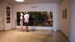 Visitors, people visit museum, interior, wildlife collection, exhibition - stock footage