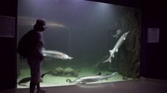 Tourist visiting aquarium, people, visitor, big Sturgeon, fish tank, indoors Stock Footage