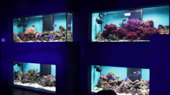 Colorful tropical fish, aquariums, corals, reef, fish tank Stock Footage
